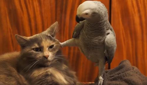 терпеливый кот и попугай