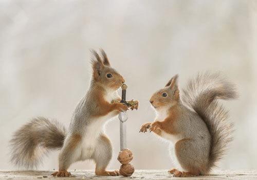 инструменты для колки орехов