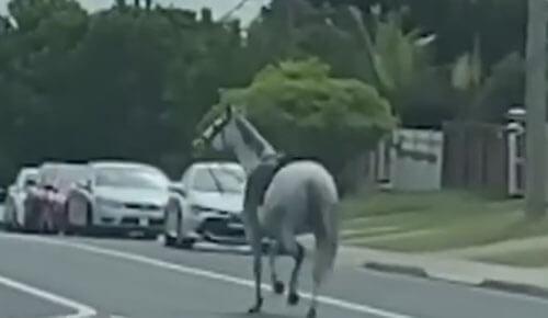 сбежавшая лошадь на дороге