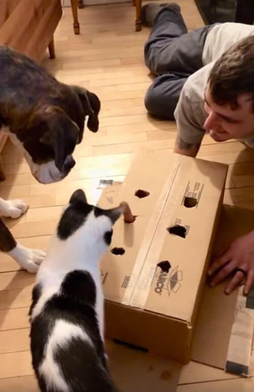 игра с коробкой и сосиской