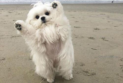 собака поднимает лапы вверх