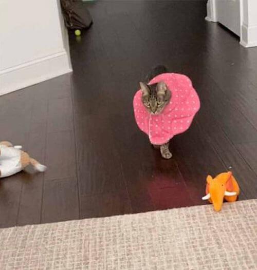 кошка в медицинском воротнике