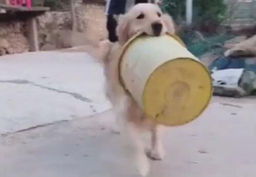 собака приносит сувениры