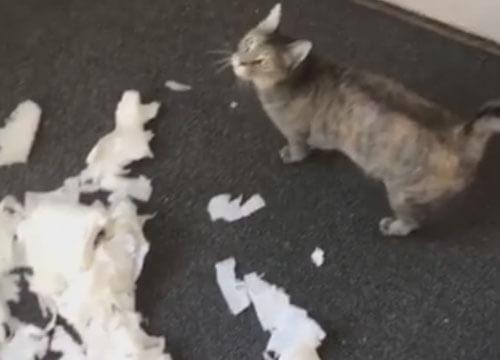 кошка разодрала бумагу