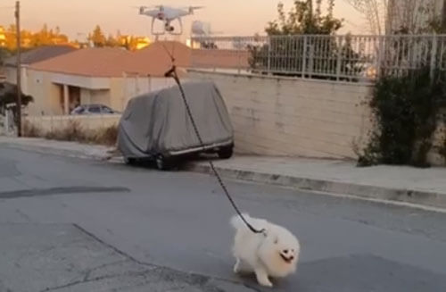 дрон гуляет с питомцем