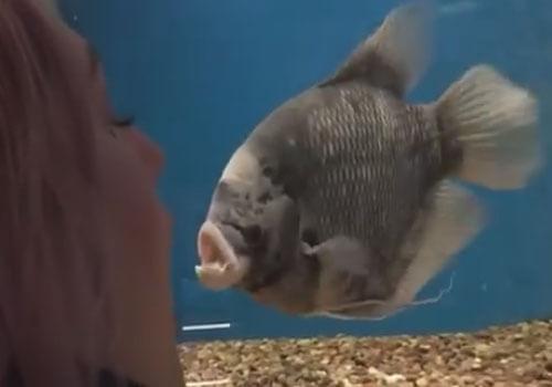 женщина разговаривает с рыбой