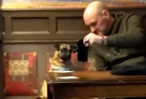 телефон заинтересовал собаку