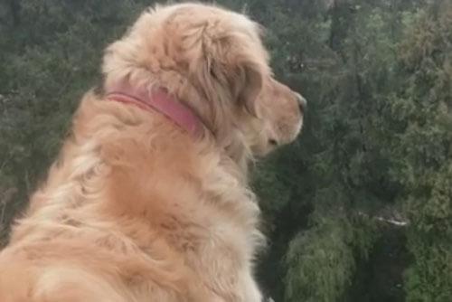 пёс сидит на холме и ждёт хозяина
