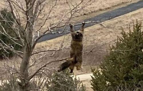 кошка повисла на дереве