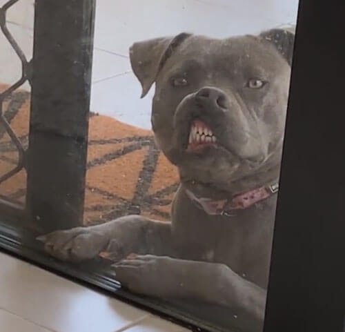 собака за стеклянной дверью