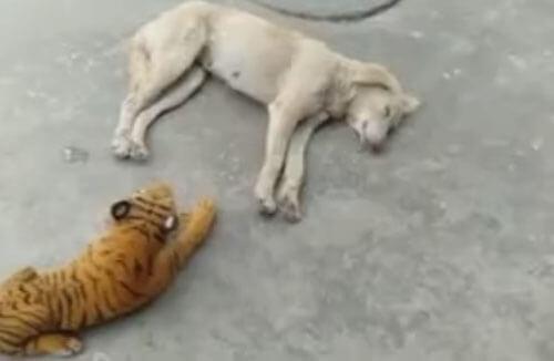 страшный игрушечный тигр