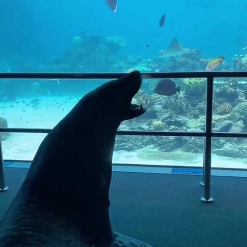 морской лев в океанариуме