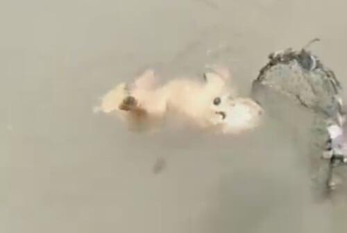 собаку спасли сачком из реки