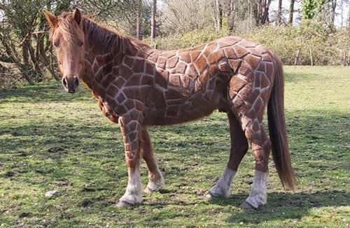 конь стал похож на жирафа