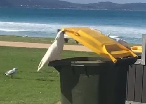 попугай открыл мусорный бак