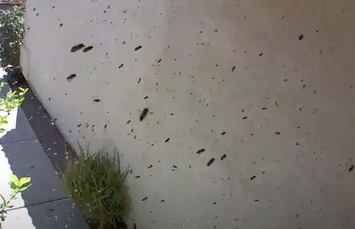 пчёлы поселились на крыльце