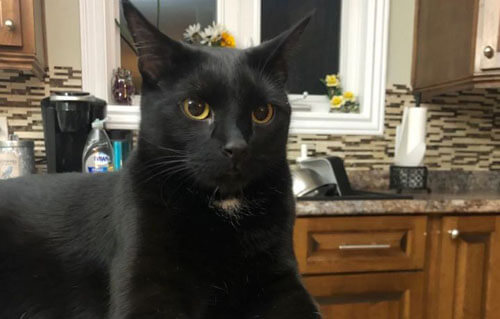 кот спас хозяев от пожара