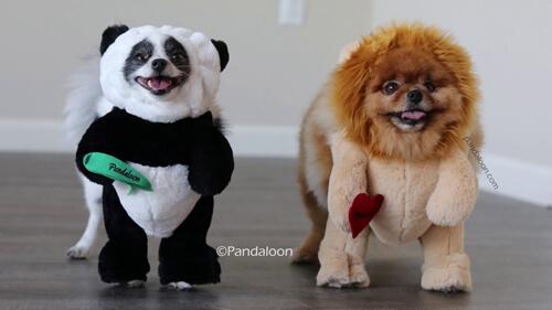 забавные костюмы для собак