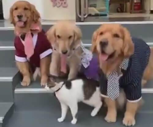 семейный портрет кошки и собак