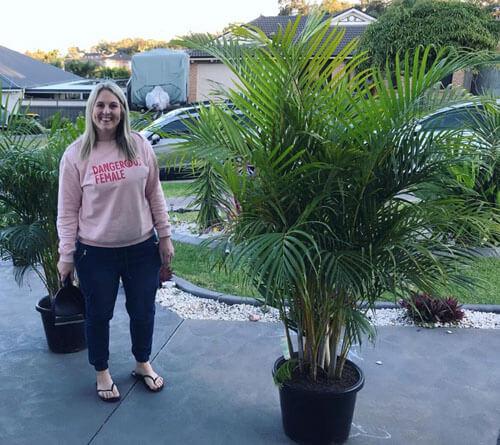 жена купила два дерева
