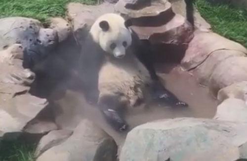горячая ванна для панды