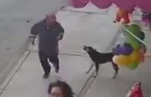 попытка дать собаке пинка