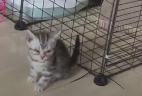 котёнок сбежал сквозь решётку