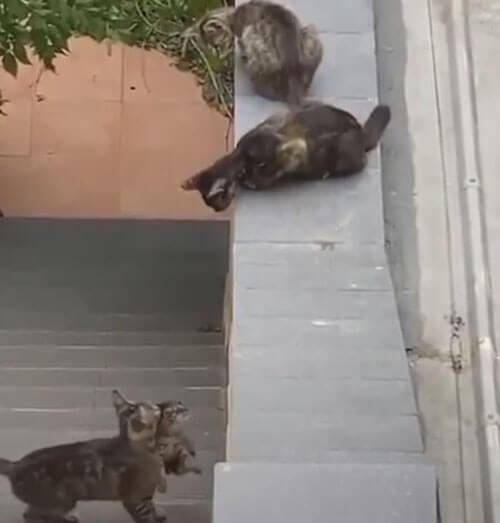 кошки волнуются из-за котёнка