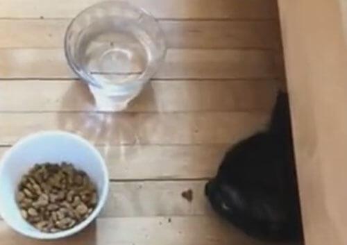 кошка украла кусочек корма