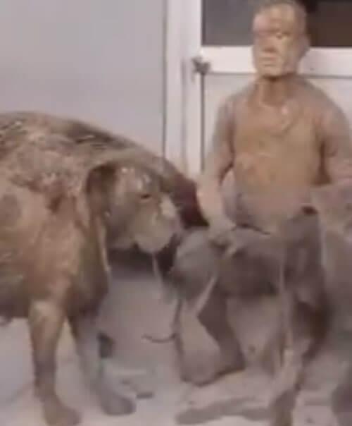 грязная прогулка с собаками