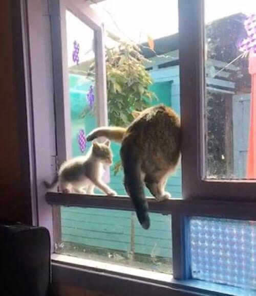 кошка выкинула котёнка из окна