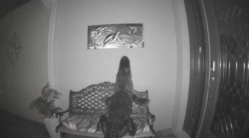 аллигатор и несъедобная черепаха