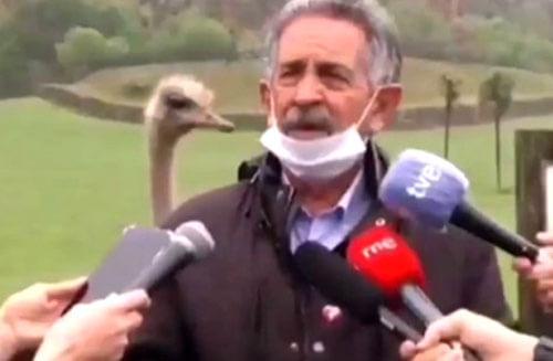 страус принял участие в интервью