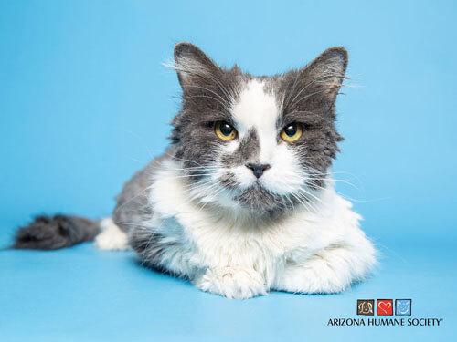 с кошки состригли килограмм меха