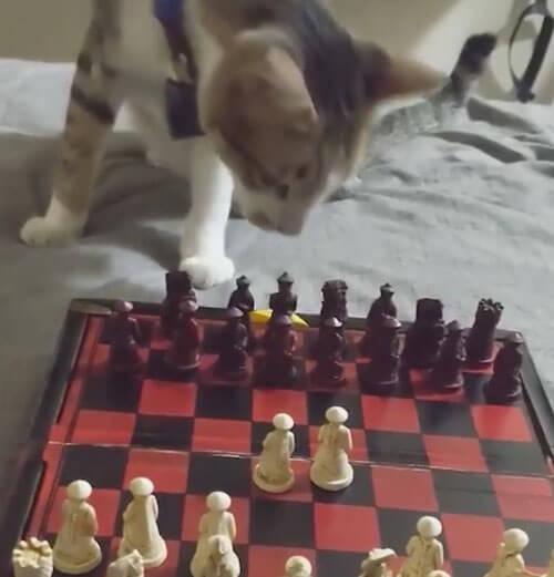 кошка играет в шахматы
