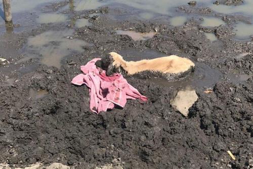 телёнок чуть не утонул в грязи
