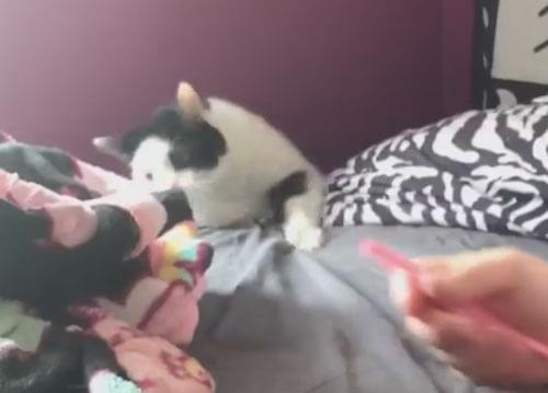 кот упал с кровати