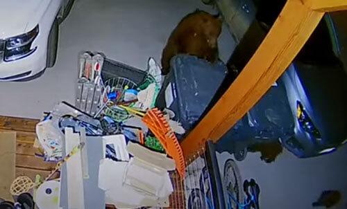 мусорный ужин для медвежат
