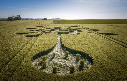 коронавирус нарисован в поле