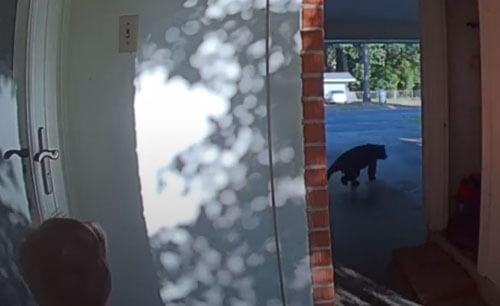 встреча мальчика с медвежонком