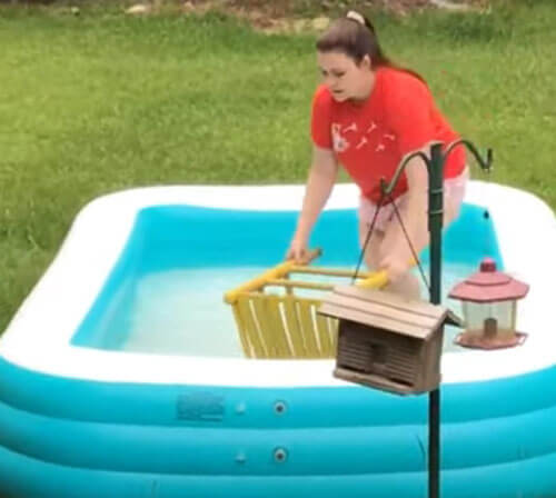 спасение белки из бассейна
