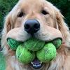 пёс любит теннисные мячики