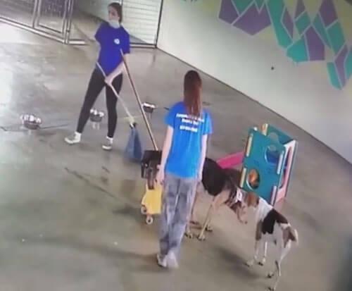 собака испражняется в ведро