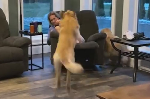 собака уронила хозяйку на пол