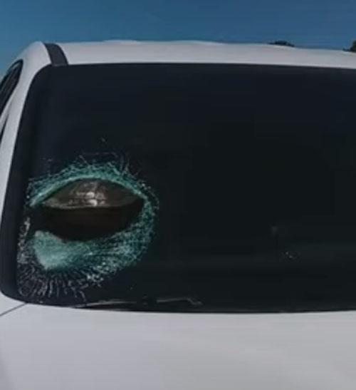 черепаха в стекле автомобиля