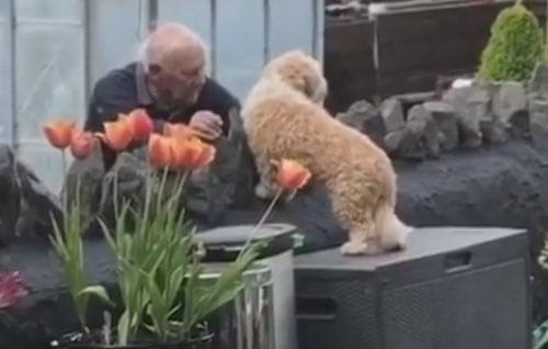 пёс подружился с соседом