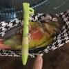 гамак для попугая из маски
