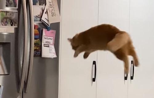 неудачный кошачий прыжок