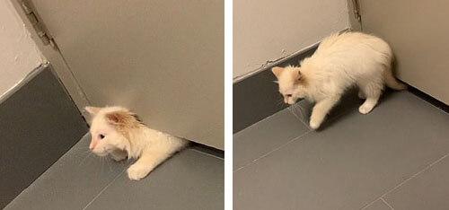 кошка просочилась под дверью