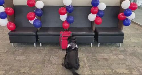 дождь из мячей для пса-пенсионера